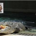Крокодил Большой Уэнделл выбрал Тони Эбботта на пост премьер-министра