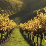Месяц австралийского вина: все, что вы не знали о наших виноградниках