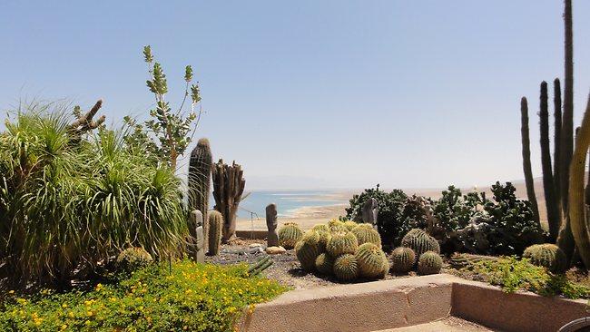Эйн-Геди киббуц на Мертвом море.