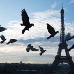 Австралийские туристы отказываются от Европы