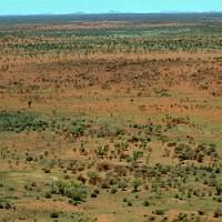 Пустыня Гибсона (Gibson Desert)