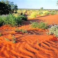 Большая пустыня Виктория (Great Victoria Desert)