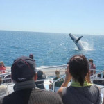 Лучшие туры Австралии: Наблюдение за китами в Херви-Бэй, Сигвей-тур по Перту, Атертонские водопады, Ч2