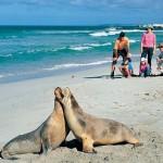 Лучшие места для семейного отдыха в Австралии: Южная Австралия, ч.5