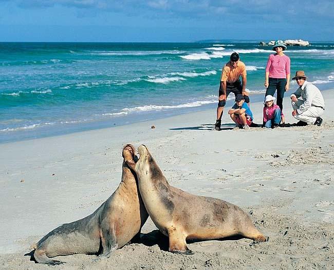 Остров Кенгуру, Южная Австралия.