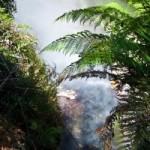 Каникулы в Новой Зеландии: Керосиновая Бухта, Радужный Воин