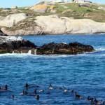 Вы можете тут поплавать с тюленями и акулами, ч3