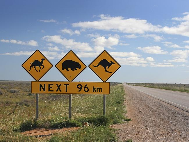 Налларбор / Nullarbor, штат Западная Австралия.