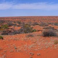 Пустыня Симпсона (Simpson Desert)