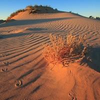 Пустыня Стшелецкого (Strzelecki)