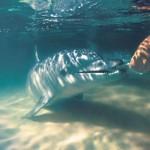 Тангалумские дельфины, ч4