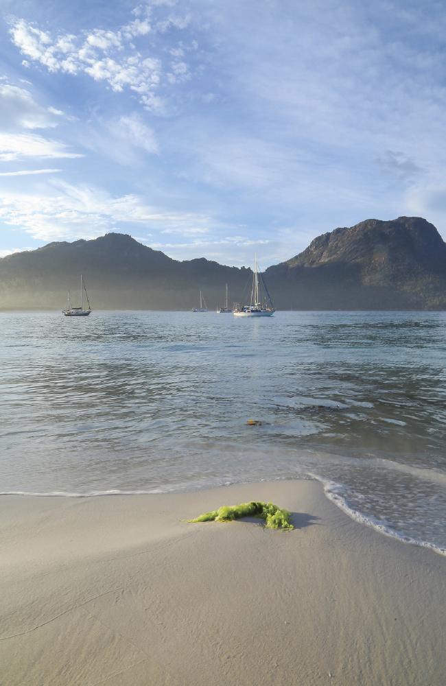 Залив Вайнглас на восточном побережье Тасмании.  Фото: Кэтрин Лихи.