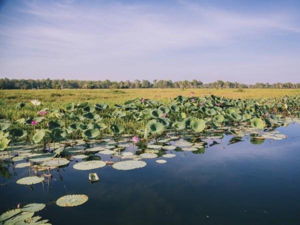 «Желтая Вода» в Национальном парке Какаду.  Фото: Туризм в Австралии / Элленор Аргайропулос.