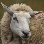Сельское хозяйство и животноводство Австралии