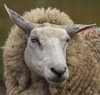 Хозяйство и животноводство австралии