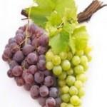 Овощеводство и виноградарство Австралии
