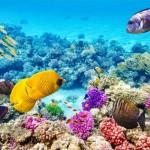 В течение следующих 50 лет Большой Барьерный риф может умереть