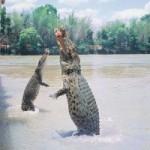 Путешествия по национальному парку Какаду!
