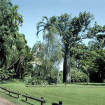 Дарвинский ботанический сад