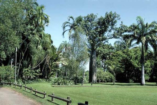 Австралийский Национальный Ботанический сад.