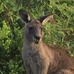 Джервис Бей – самое недооцененное райское место в Австралии, ч.3